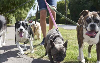 Are Dog Parks and Dog Walking companies good for your dog?
