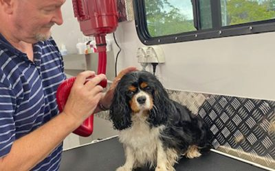 New Mobile Dog Grooming Service